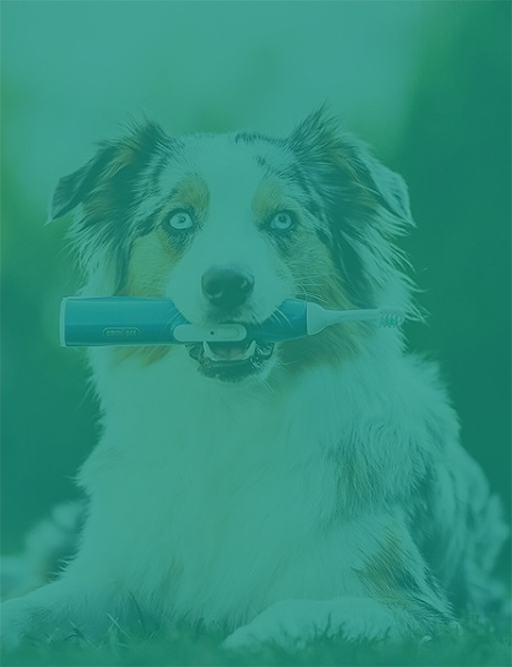 Fogkefe kutyáknak: Emmi-pet